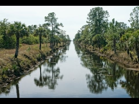 Picayune Strand State Forest Camping Overview