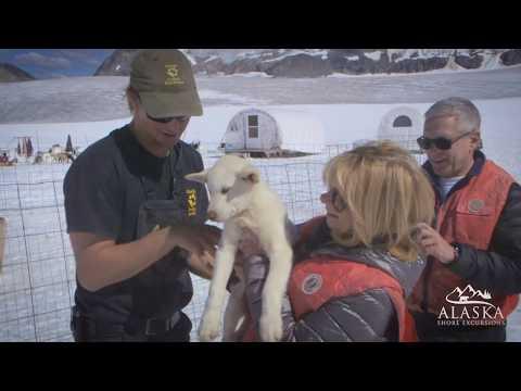 Dogsled & Glacier Flightseeing Helicopter Tour - Skagway, Alaska