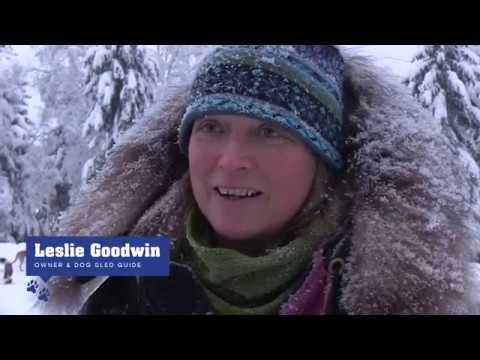 Alaska Winter Sled Dog Tours (behind-the-scenes) | Paws for Adventure in Fairbanks, Alaska