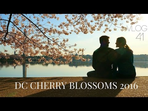 Visiting the 2016 DC Cherry Blossoms! | MOTM VLOG #41