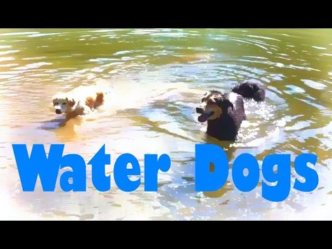 This Dog Loves The Water - Mocha's Favorite Pastime