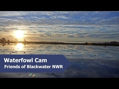 Highlights from the Blackwater Waterfowl Cam | December 2018