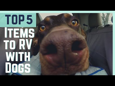 Top 5 MUST HAVE Items for RVing With Dogs || Full Time RV Living