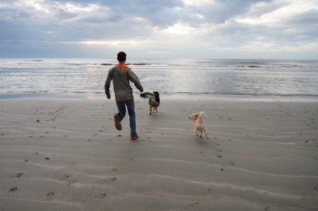 kiawah beach dog friendly