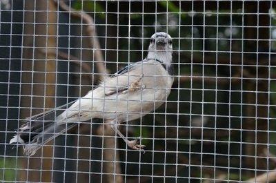 wild bird sanctuary florida keys