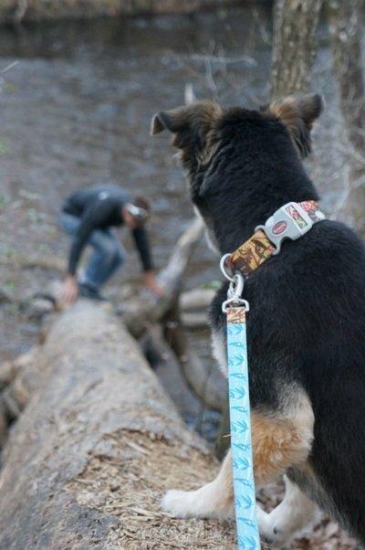 cute dog o'leano state park