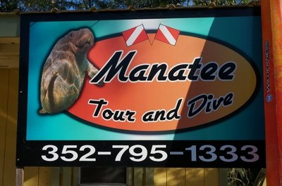 swimming with manatees groupon