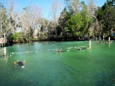 swimming with manatees at manatee sanctuary