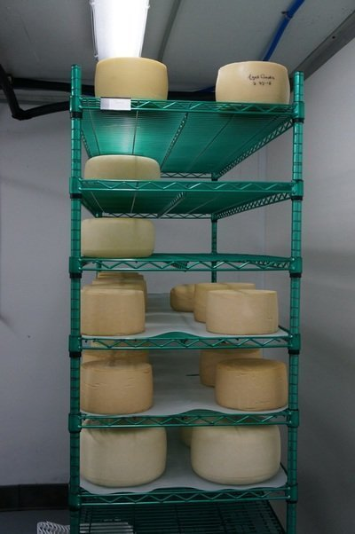 ageing cheese
