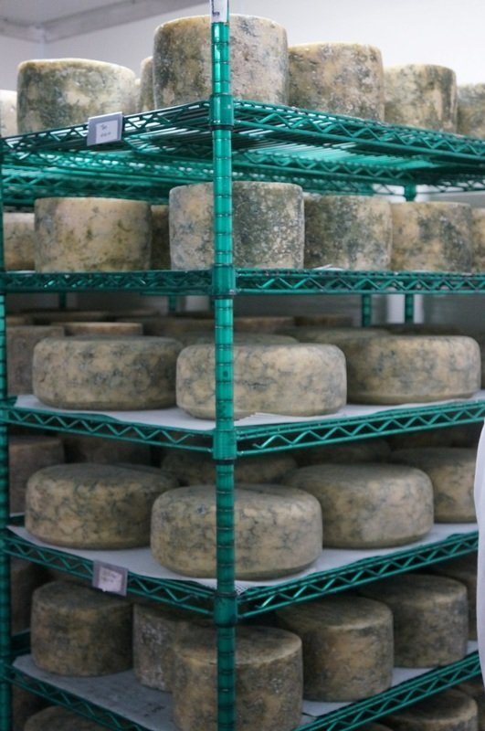 moldy cheese wheels