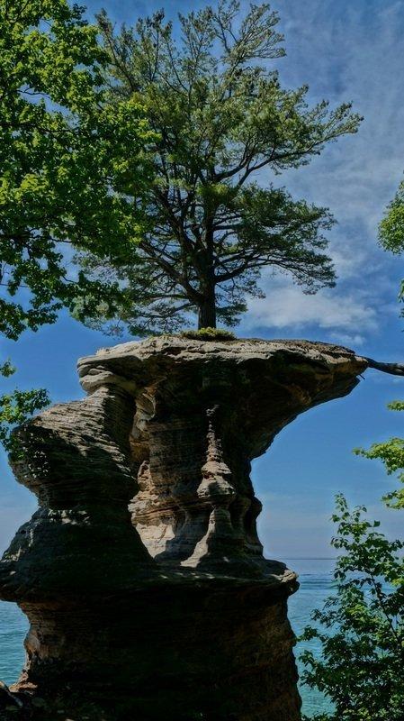 tree on rock michigan