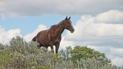wild horse in theodore roosevelt national park