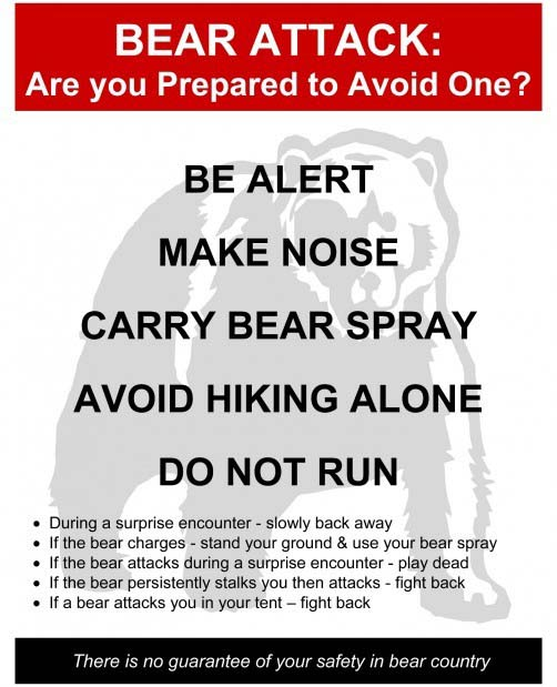 avoid bear attack graphic