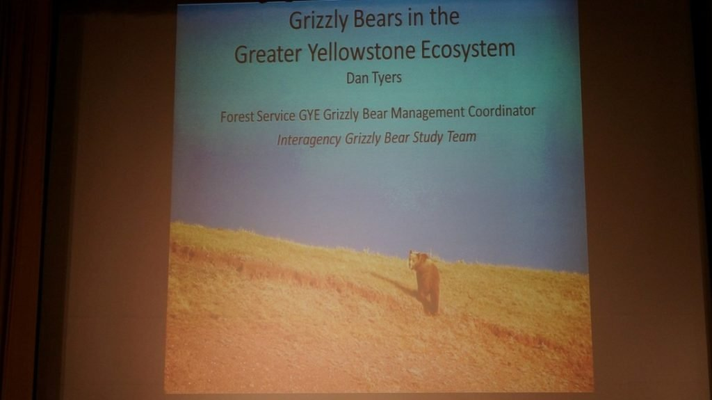 Grizzly bears in the greater yellowstone ecosystem