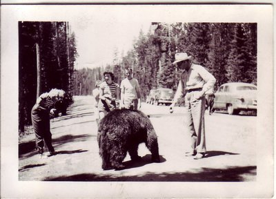 old photo of grizzly bears in yellowstone