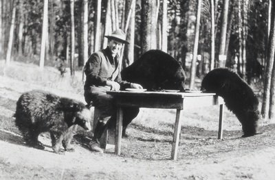 grizzly bears in yellowstone old photo