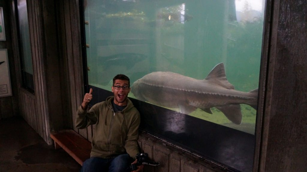 sturgeon at bonneville fish hatchery