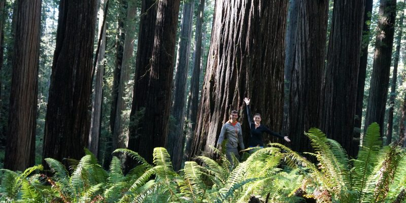 mortons on the move at redwoods national park
