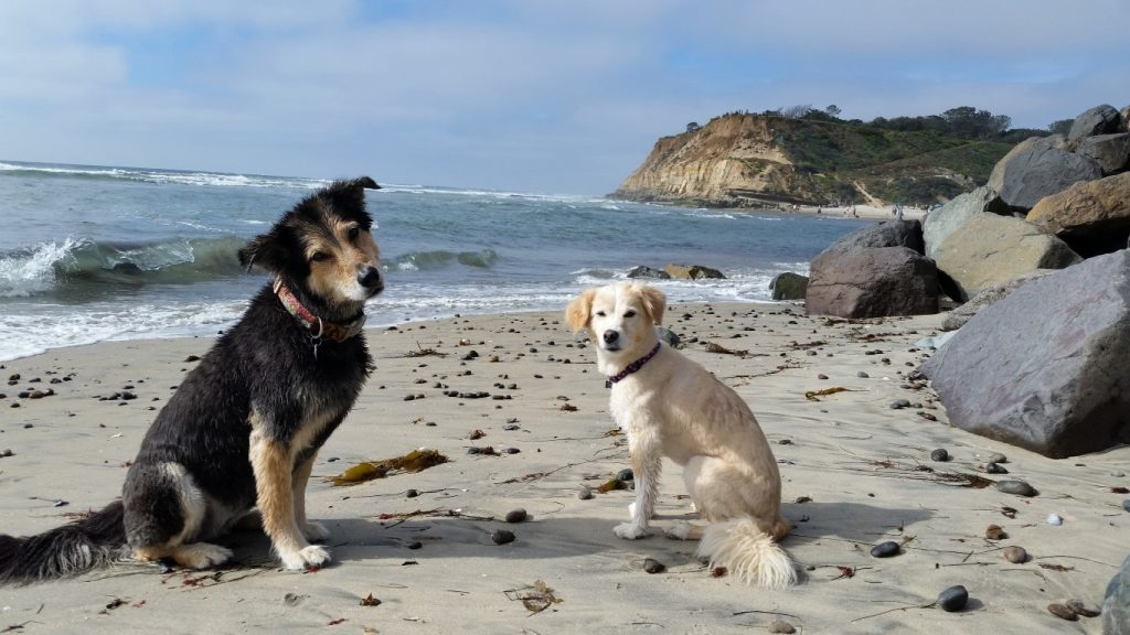 cute dogs on beach