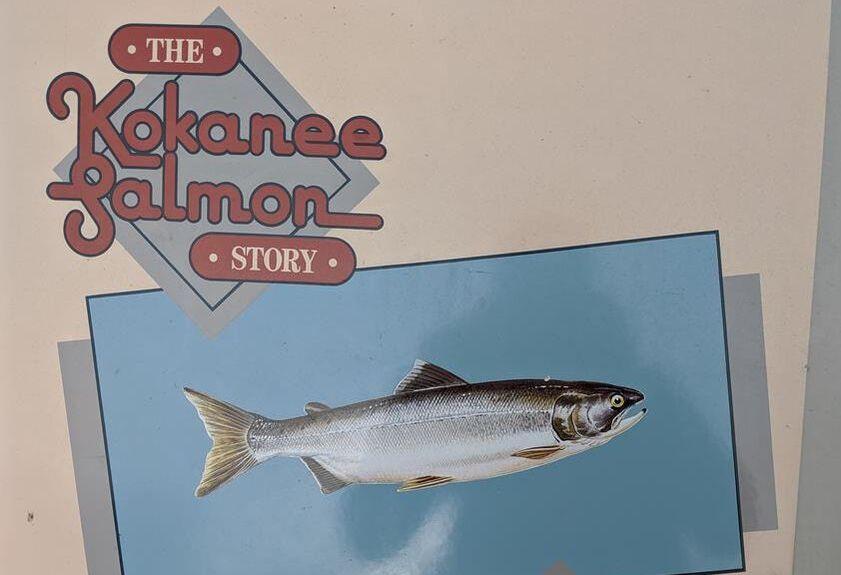kokanee salmon story info board