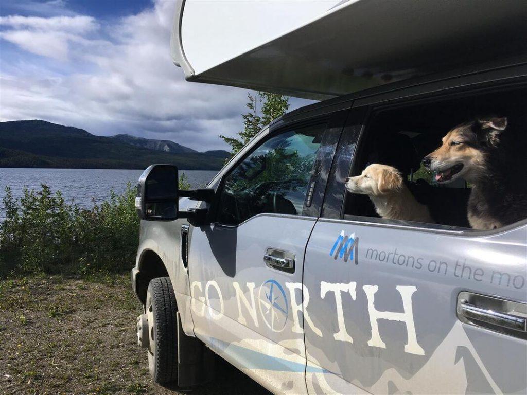 dogs in go north truck camper