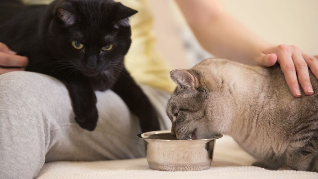 person comforting cats as they eat