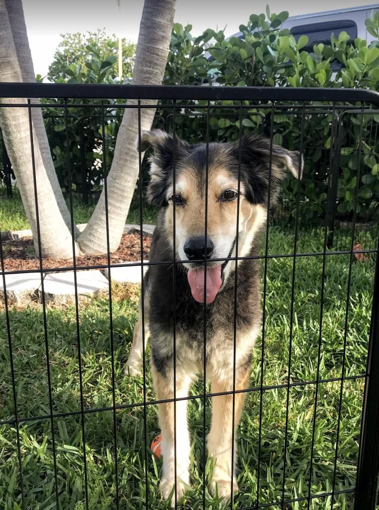 dog in outdoor playpen