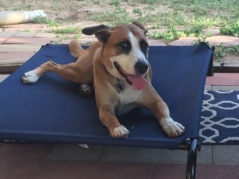 dog camping chair