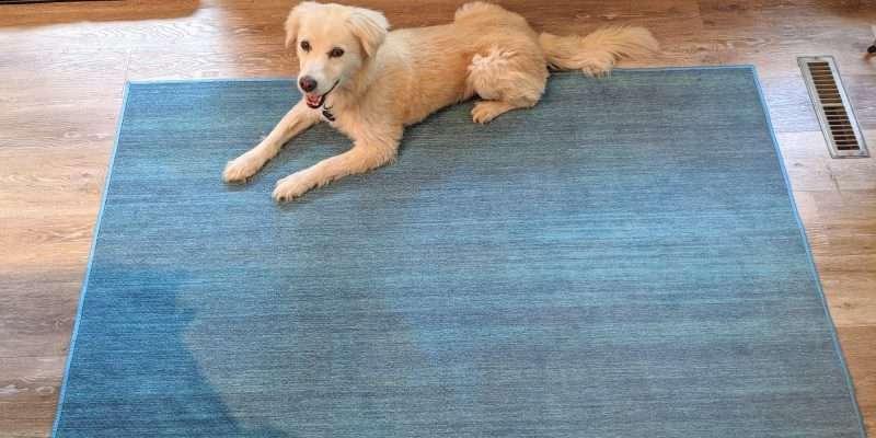 My Magic Carpet with Bella