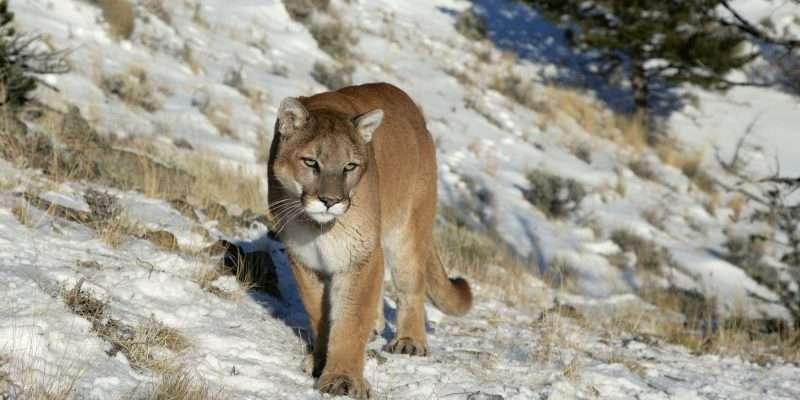 Rocky Mountain National Park Wildlife