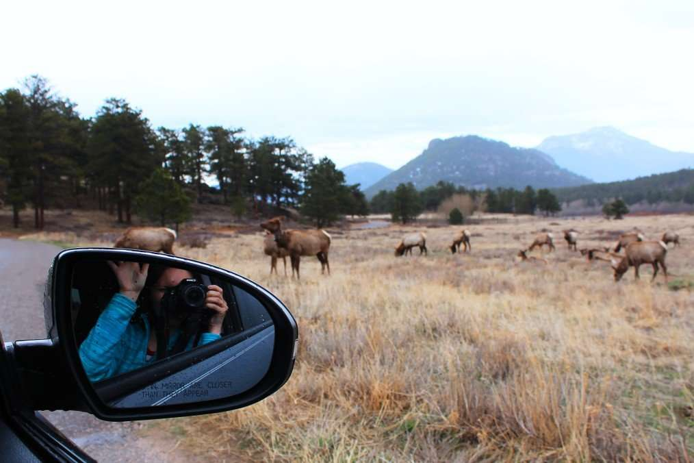 taking photos of rocky mountain national park wildlife out car window