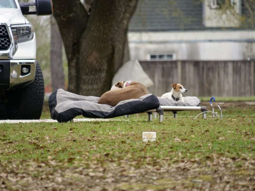 Two dogs laying on camping beds outside at campground