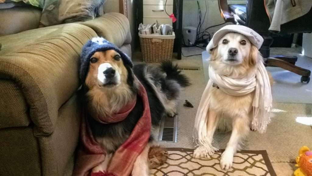 dogs with hats and scarves on for cold weather camping