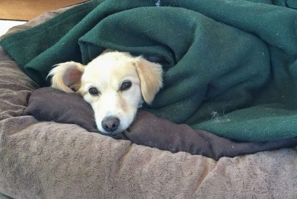 dog wrapped in camping blanket to keep warm