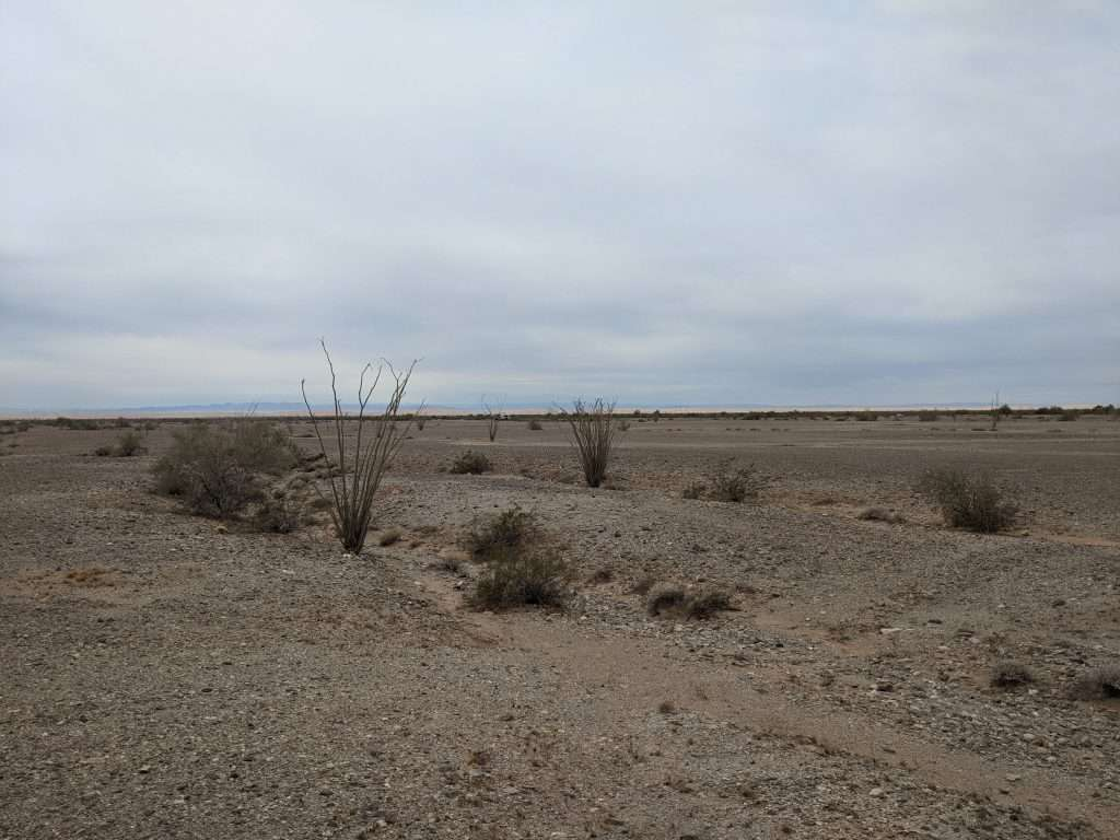 Arid desert landscape where Valley Fever can spread