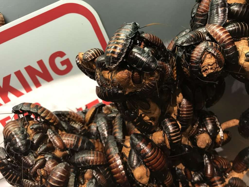 Nest of cockroaches.