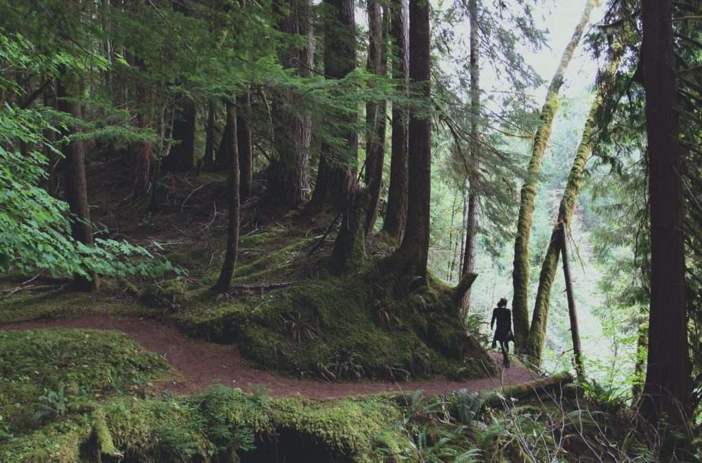 Person hiking in Olympic National Park.