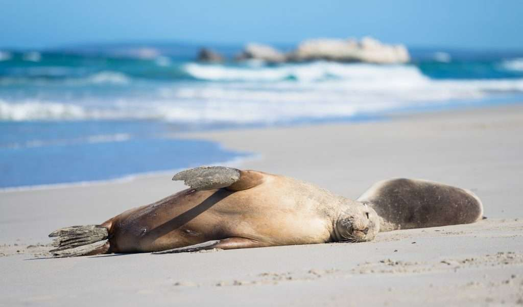 Sea lions sleeping in the sand.