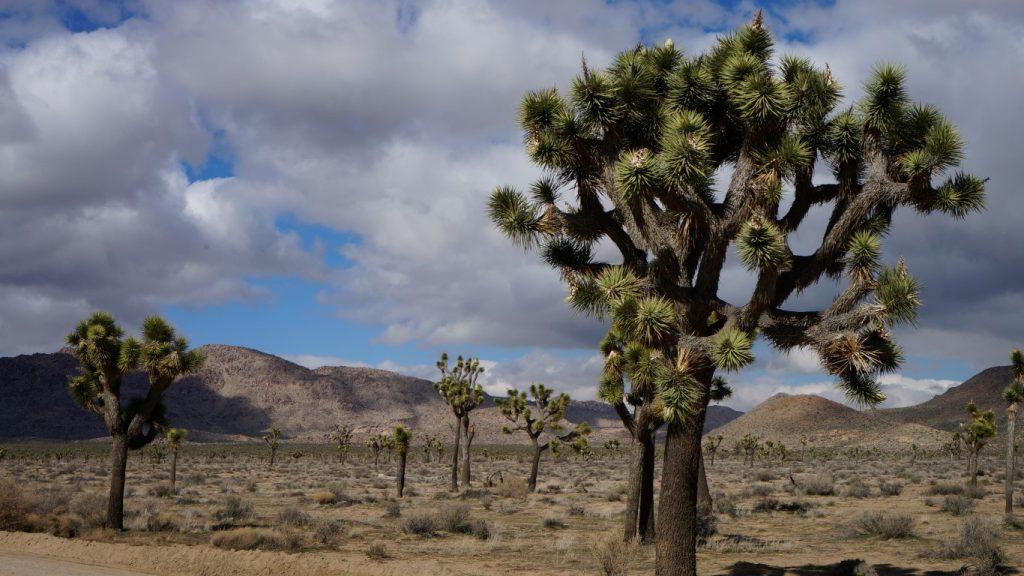 joshua tree national park mortons on the move