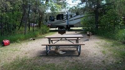 dog under table juniper campground ND