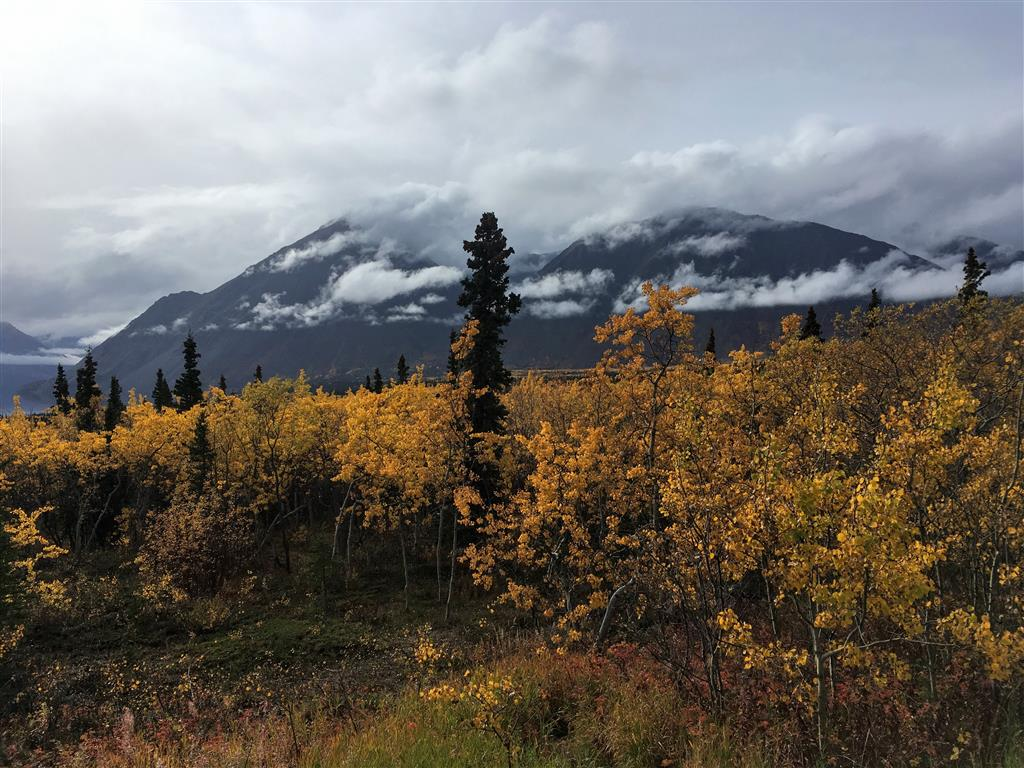 fall colors at kluane national park