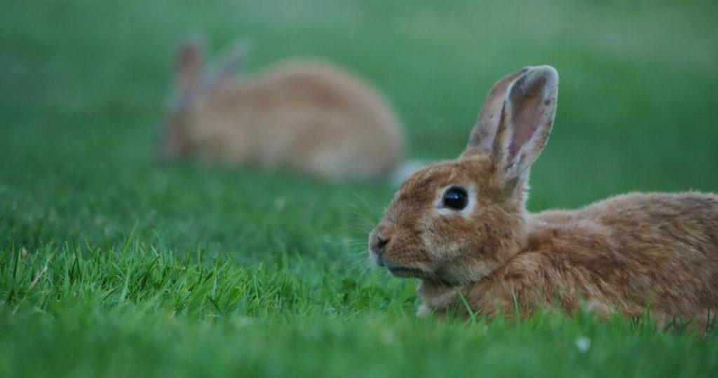 bunny rabbits in valdez alaska