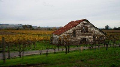 sonoma wine field